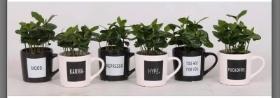 Coffee mug and coffee plant